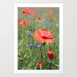 poppy flower no16 Art Print