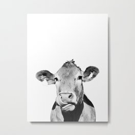 Cow photo - black and white Metal Print