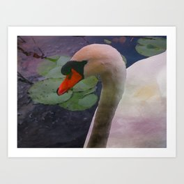Mute Swan - Water Color Art Print