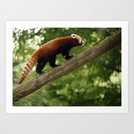 Happy Red Panda. Art Print