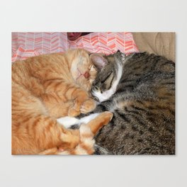 Nap Buddies Canvas Print