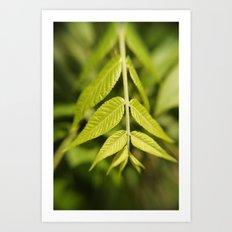 Leafy Down Art Print
