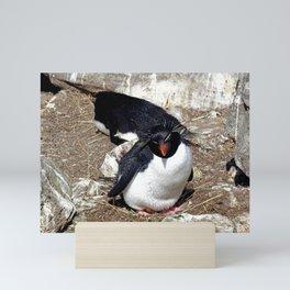Rockhopper Penguin Sitting on Egg Mini Art Print