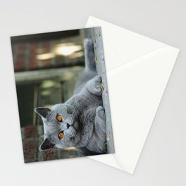 Diesel the cat ! Stationery Cards