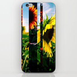 Sunflowers in Maryland iPhone Skin