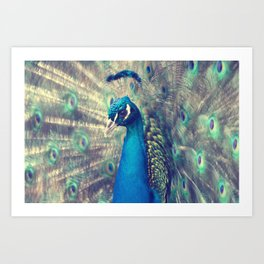 Peacock in the courtship Art Print