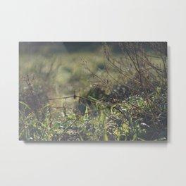 Light on Grass Metal Print