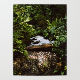 THE RAINFOREST II Poster
