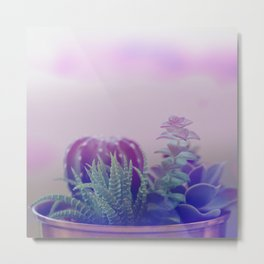 Little succulents and cactus in pot Metal Print