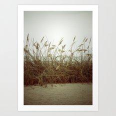 Beach Wheat Grass Art Print