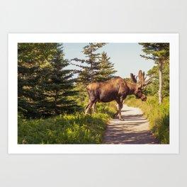 Skyline Trail Moose Art Print