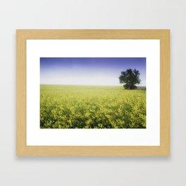 Canola Field, Western Oklahoma Framed Art Print