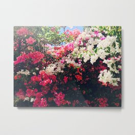 Bougainvillea of South Africa Metal Print