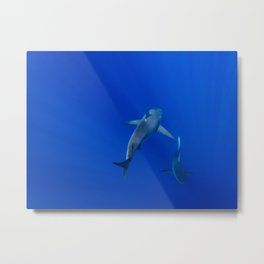 Hawaiian Shark III Metal Print