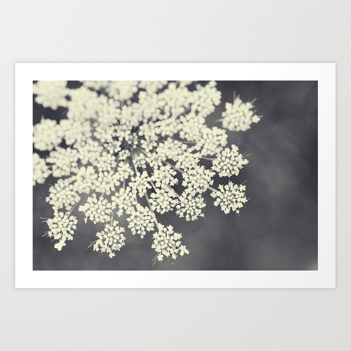 Black and White Queen Annes Lace Art Print