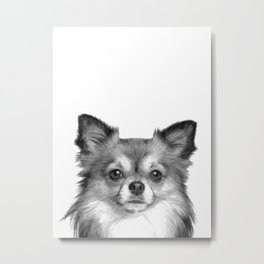 Black and White Chihuahua Metal Print