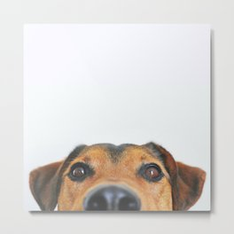 Ted, the Daschund Metal Print