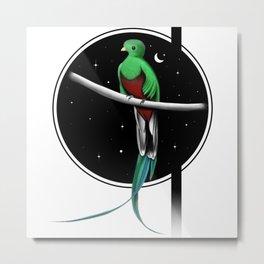 Beautiful Quetzal at night  Metal Print