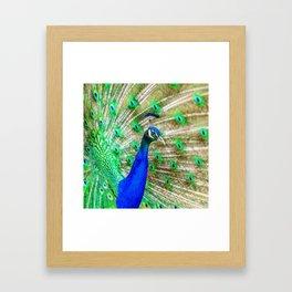 Peacock Pride Framed Art Print