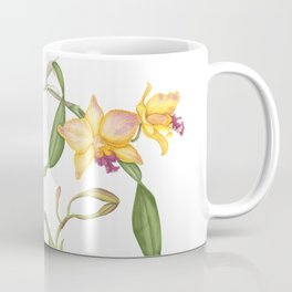 Flowering yellow cattleya orchid plant Coffee Mug