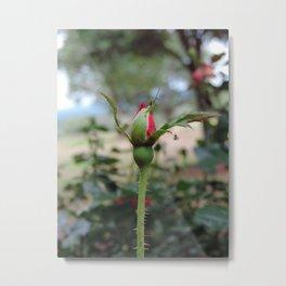 Texas rosebud Metal Print
