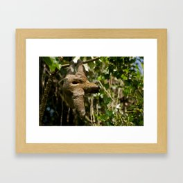 Brown-throated Three-toed Sloth Framed Art Print