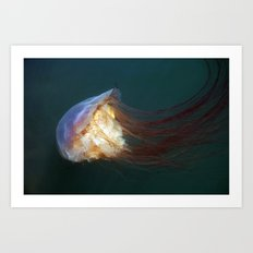 Jellyfish2 Art Print