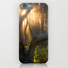 Burst of Light - Tree in Shonan Near Sunset iPhone Case