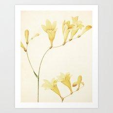 IV. Vintage Flowers Botanical Print by Pierre-Joseph Redouté - Sisyrinchium Collinum Art Print