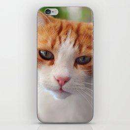 Garfield - a red cat iPhone Skin