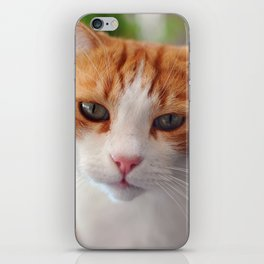 Garfield - a red cat iPhone Skin