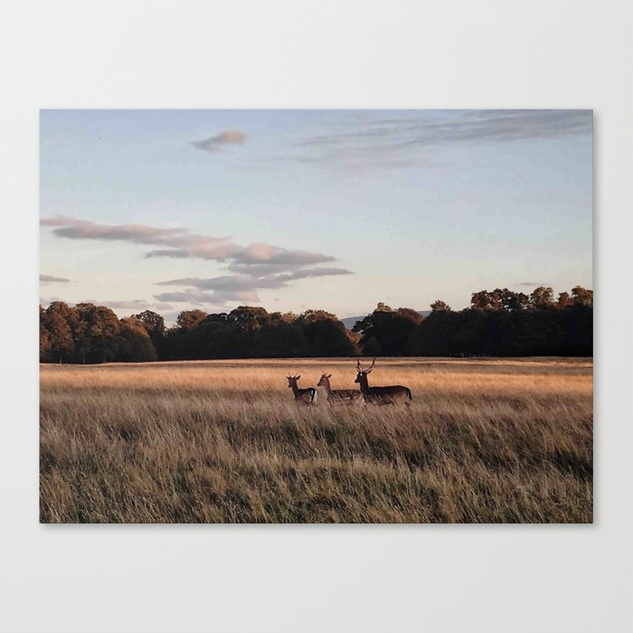 Deers going home Canvas Print