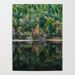Forest Reflection Poster