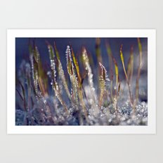 Frosted moss 38 Art Print