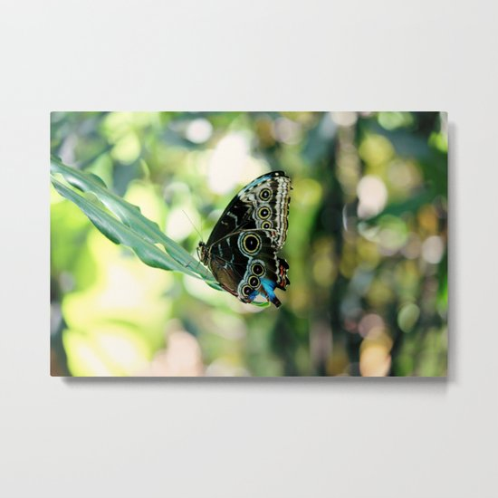 With a Broken Wing... Metal Print