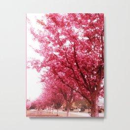 Frühlingsblüten Metal Print