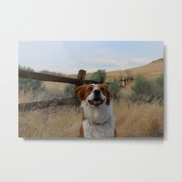 Smiling pup in a field Metal Print
