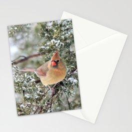 Frosty Female Cardinal Stationery Cards