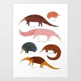 Pangolin, Anteater & Echidna Print Art Print
