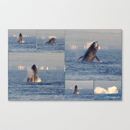 """""""baby whales tales""""- Mauii Canvas Print"""