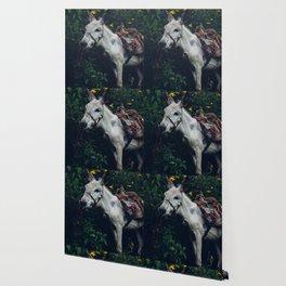 Ami de la montagne Wallpaper