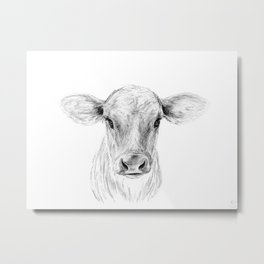 Moo ::  A Young Jersey Cow Metal Print