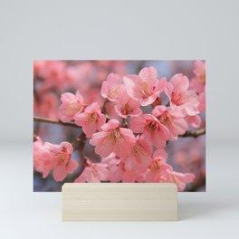 cherry blossom Mini Art Print