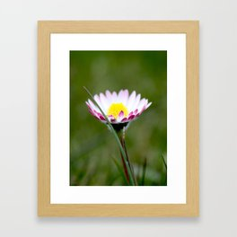 Standing Alone Framed Art Print
