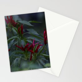 Red chili peppers in the plant Stationery Cards