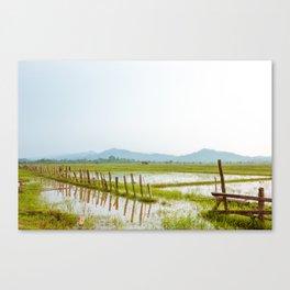 Growing Rice Canvas Print