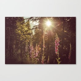 Wildflower Sunrise in the Mountains - Nature Photography Canvas Print