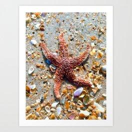 Washed up Beautiful Red Starfish Photo Art Art Print