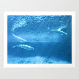 Ocean Blue Beluga Pairs Version 2 Art Print