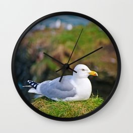 Herring Gull at Rest Wall Clock